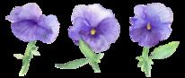 Pflanzen, Blau, Blumen, Aquarellmalerei