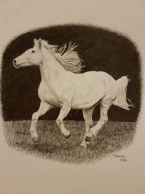 Natur, Pferde, Tiere, Schimmel
