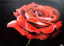 Rot, Dunkel, Blumen, Pflanzen