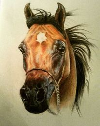 Pferde, Buntstiftzeichnung, Araber, Zeichnungen