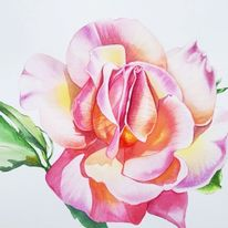 Aquarellmalerei, Illustration, Rose, Licht