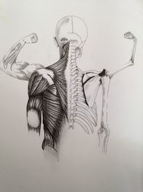 Anatomie, Tusche, Schädel, Zeichnung