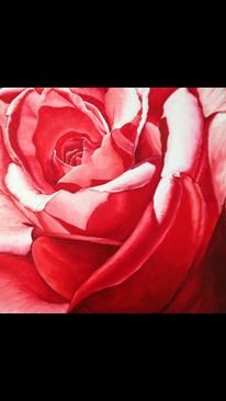 Rose, Pflanzen, Rot, Natur