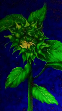 Sonnenblumen, Gelb, Mischtechnik, Naturalistisch