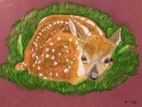 Kitz, Pastellmalerei, Bambi, Zeichnungen
