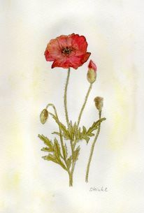 Rot, Aquarellmalerei, Mohnblumen, Wiese