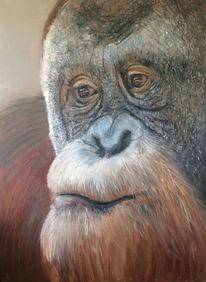 Menschenaffen, Tierportrait, Orang utan, Malerei
