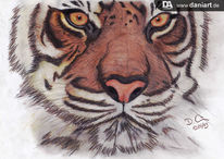 Zeichnung, Tiger, Bleistiftzeichnung, Tiere