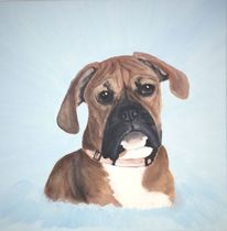 Tiere, Boxer, Hund, Hundeportrait