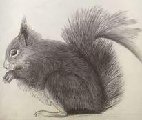 Eichhörnchen, Kugelschreiber auf zeichnungspapier, Zeichnungen