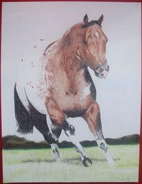 Buntstiftzeichnung, Pferde, Appaloosa, Zeichnungen