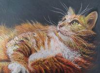 Tierzeichnung, Pastellmalerei, Katze, Zeichnungen