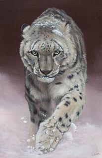 Schnee, Leopard, Katze, Fell