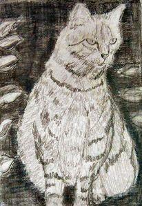 Katze, Mimik, Listig, Zeichnungen