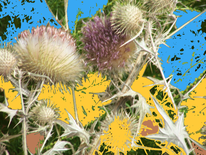 Distel, Stachelig, Digitale kunst,