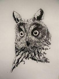 Tiere, Federzeichnung, Gesicht, Augen