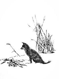 Schnee, Schilf, Fuchs, Zeichnungen