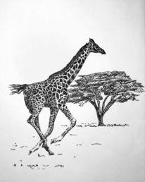 Giraffe, Galopp, Zeichnungen