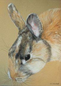 Tricolore, Kaninchen, Zeichnungen,