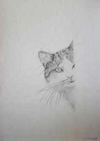 Blick, Bleistiftzeichnung, Katze, Neugier