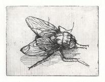 Grafit, Fliege, Realismus, Radierung