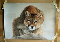 Freiheit, Puma, Pastellmalerei, Zeichnungen