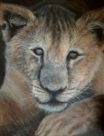 Naturliebe, Polychroms, Löwe, Zeichnungen
