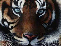 Tierwelt, Tiere, Natur, Tiger