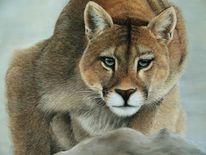Pastellmalerei, Pumas pastels, Freiheit, Tierwelt