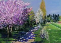 Kirschblüte, Zierkirsche, Weg, Obstblüte