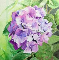 Hortensien, Lila, Aquarellmalerei, Pflanzen