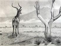Impalla, Kilimandscharo, Savanne, Antilope