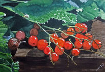 Aquarellmalerei, Johannisbeeren, Grün, Blätter