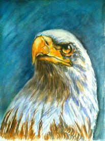 Raubvogel, Aquarellmalerei, Tiere, Portrait