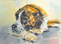Tiere, Portrait, Aquarellmalerei, Hund