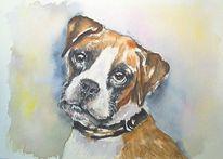 Boxer hund, Hundeportrait, Aquarellmalerei, Deutscher boxer