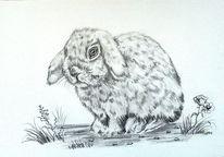 Bleistiftzeichnung, Tierzeichnung, Schwarz, Tiere
