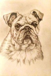Bleistiftzeichnung, Tierportrait, Tiere, Hund