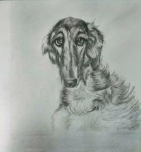 Bleistiftzeichnung, Hund, Tierportrait, Zeichnung