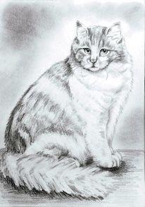 Zeichnung, Bleistiftzeichnung, Tiere, Katze