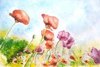 Blumen, Aquarellmalerei, Mohnblumen, Blumenwiese