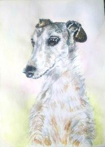 Tierportrait, Aquarellmalerei, Tiere, Windhund