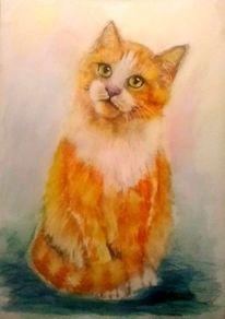 Tierportrait, Tiere, Katzenaugen, Katze
