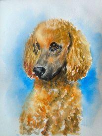 Aquarellmalerei, Portrait, Schön, Hund