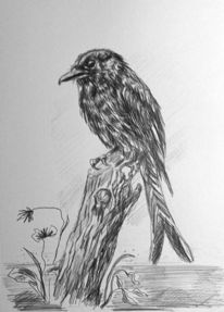 Tiermalerei, Vogel, Schwarz, Zeichnung
