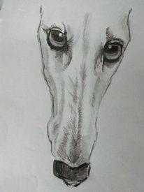 Hund, Zeichnung, Windhund, Bleistiftzeichnung