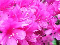 Natur, Blumen, Fotografie, Phantastik