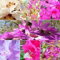 Fotografie, Modern, Collage, Blumen