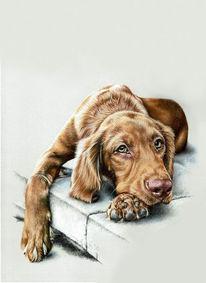 Hundezeichnung, Zeichnung, Liegender hund, Pastellmalerei