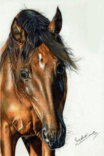 Pferde, Pre, Pastellmalerei, Portrait